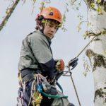 tree_slider