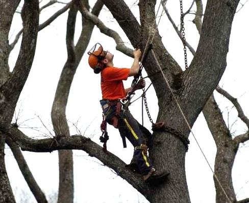 Фото удаление деревьев.